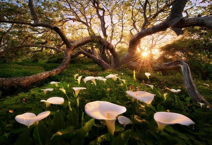 Paraíso en la tierra, de Marc Adamus