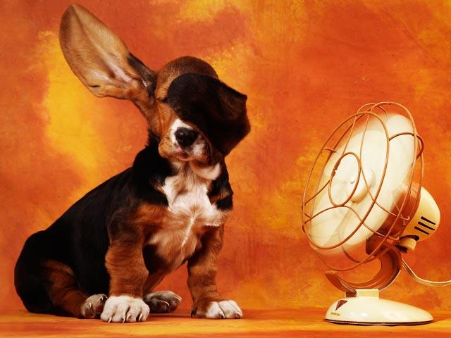 Pasa del ventilador con el aire acondicionado solar