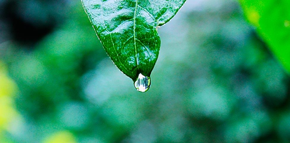 Días mundiales del medioambiente y la ecología